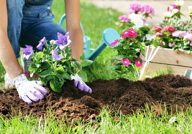 AWBS Multi Purpose Peat Free Compost