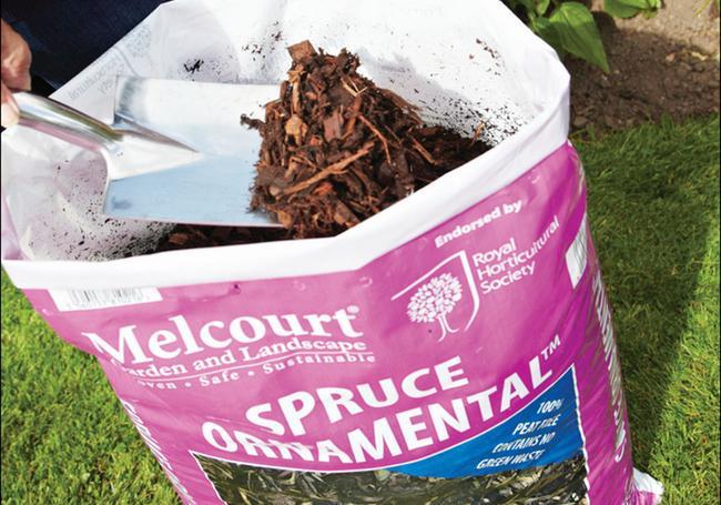 Melcourt Ornamental Spruce