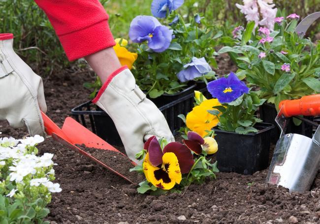 AWBS Planting Topsoil