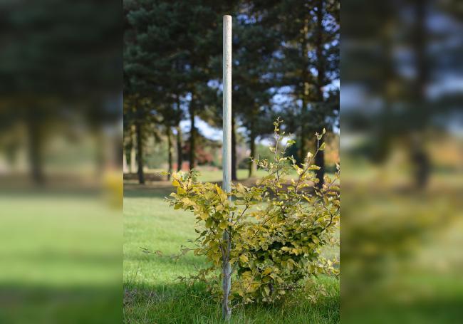 Grange Tree Pole