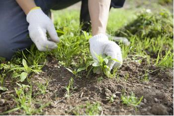 The Best Solutions For Garden Weed Control
