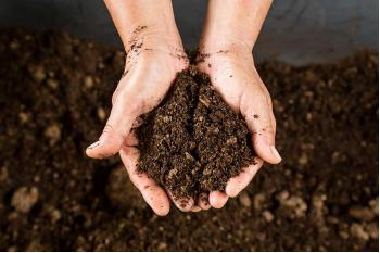 A Quick Guide to Compost