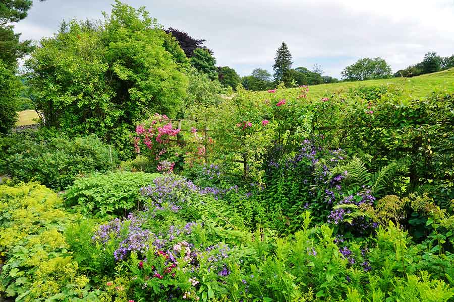 A garden planted to attract wildlife